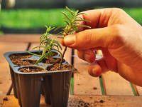Průvodce řízkováním: Namnožte si své oblíbené bylinky a keře