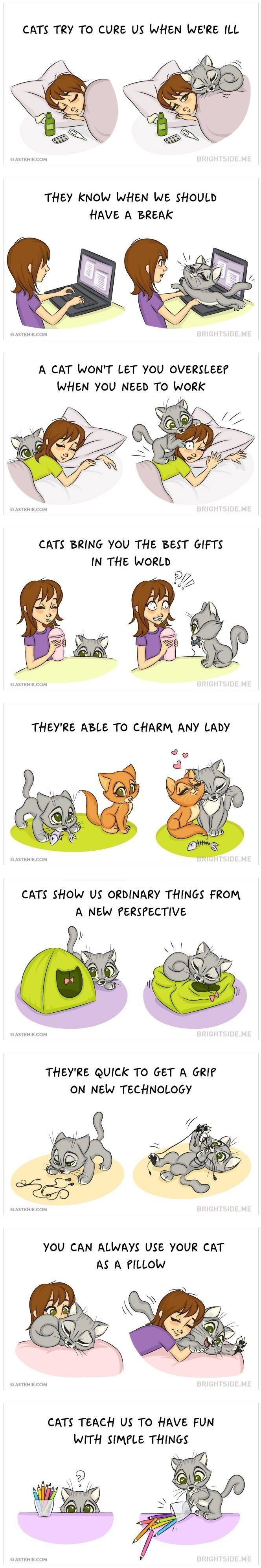 ~ Katzen sind einfach die Besten! Hier sind 9 Gründe, warum jeder in seinem Leben eine Katze braucht. Credits: ASTKHIK ~