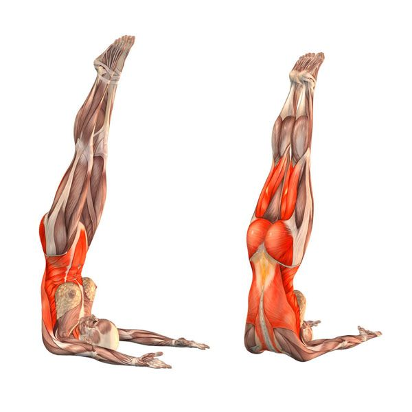 Unsupported shoulderstand - Niralamba Sarvangasana - Yoga Poses | YOGA.com Sports & Outdoors - Sports & Fitness - Yoga Equipment - Clothing - Women - Pants - yoga fitness - http://amzn.to/2k0et0A