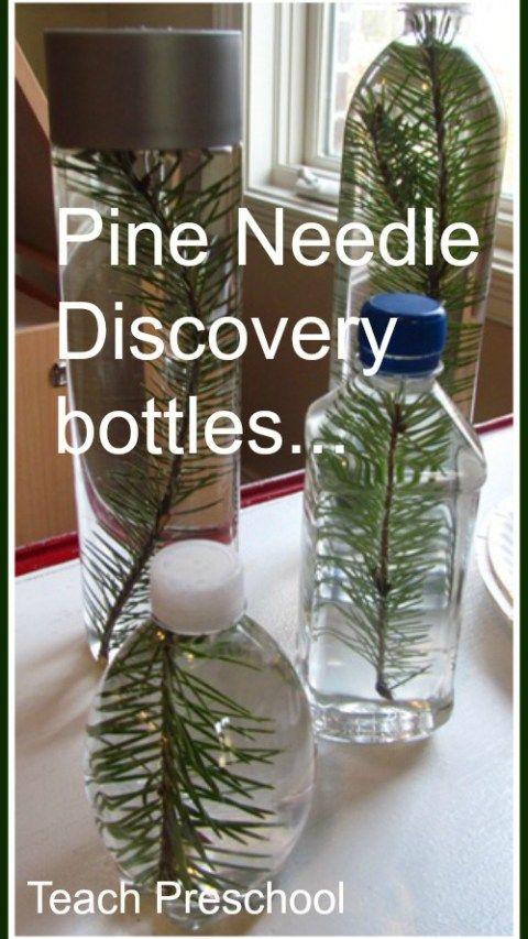 Pine Needle Discovery Bottles by Teach Preschool