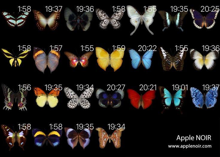Apple Watchの文字盤に出現するチョウの図鑑