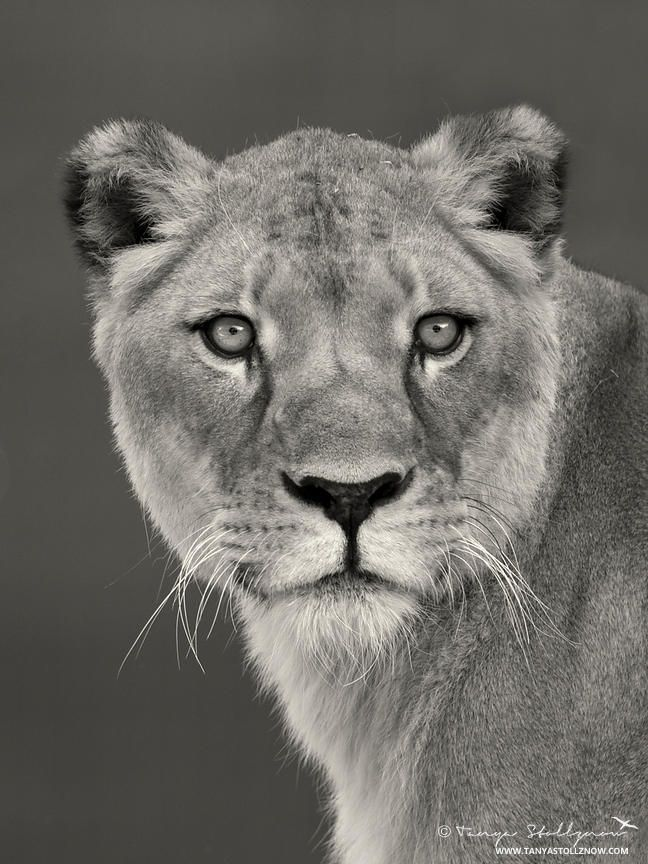 265 best images about WILD LIFE in B & W on Pinterest ...