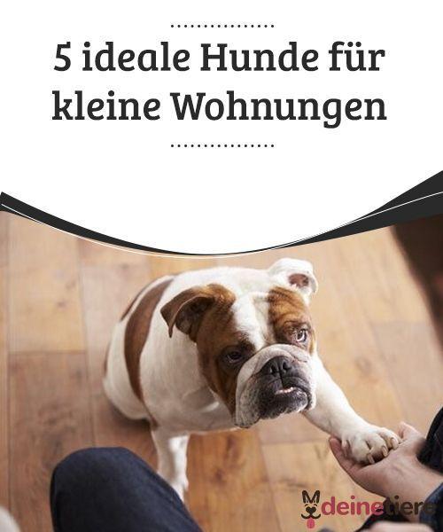 5 Ideale Hunde Fur Kleine Wohnungen Wohnung Hund Hunde Und Kleine Wohnung