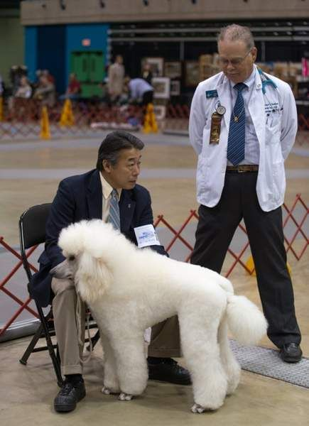 The Mispillion Kennel Club was founded in Milford nearly 50 years ago.  Earlier this month it held the 48th annual American Kennel Club show where 140 different dog breeds competed.
