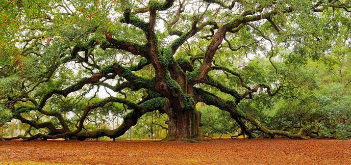 i_bios-urn-urne-funeraire-arbre5.jpg