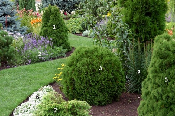 ornamental plants,landscape design,conifers,trees,shrubs,plants,fruit,ornamental plants,ornamental plants