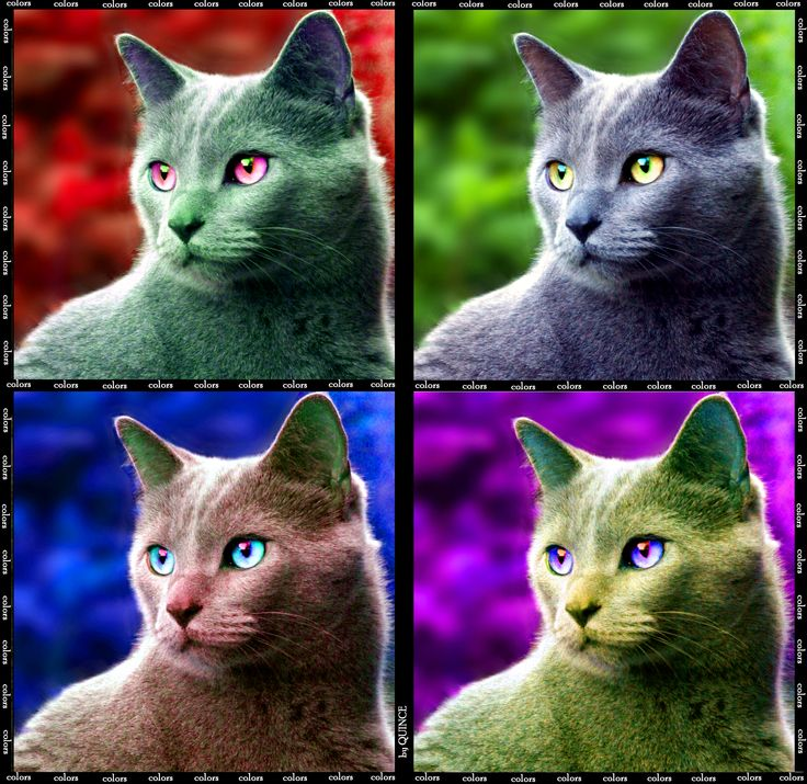 My cat in Warhol Style