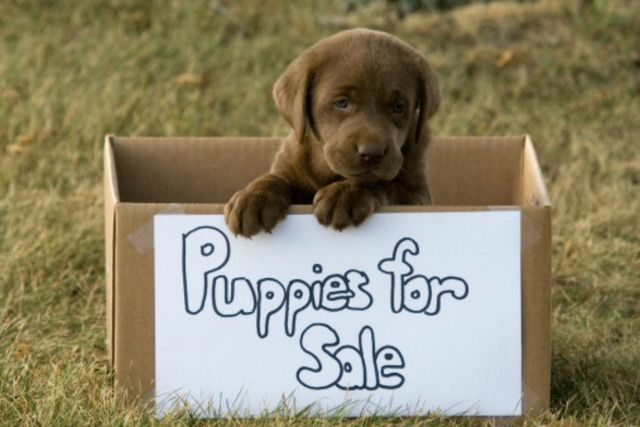 Many pet retailers do not sell pets for profit. Here's what you need to know if you do so, with tips for how to transition away from this.