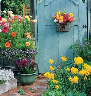 So colorfulModern Gardens, Spring Flower, Blue Doors, Gardens Design Ideas, Interiors Design, Gardens Gates, Gardens Doors, Interiors Gardens,  Flowerpot