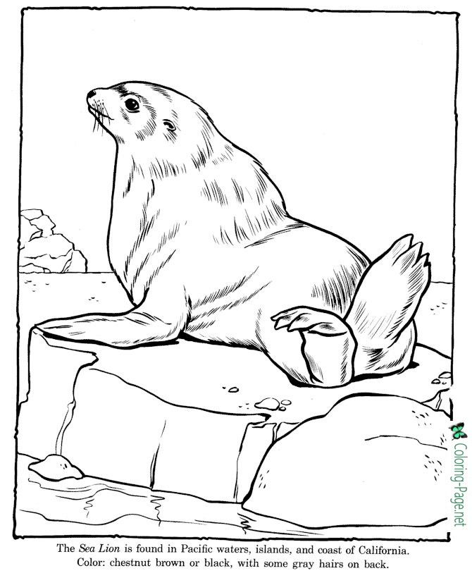 Sea Lion Coloring Page Youngandtae Com Em 2020 Desenhos Para Colorir Foca Desenho Desenho De Animais