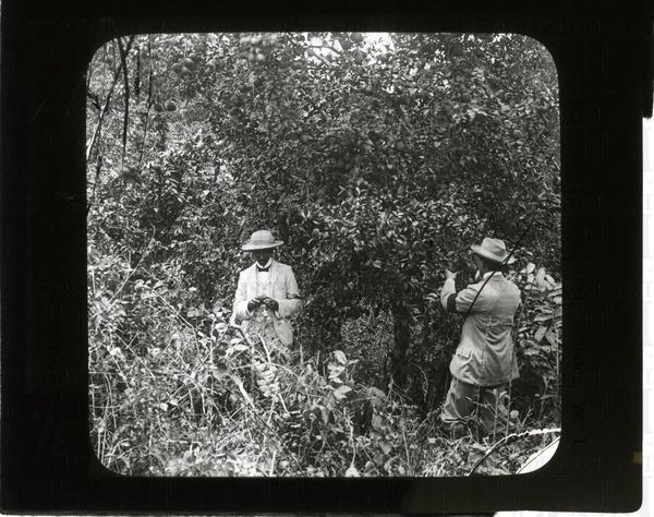 Bread-fruit trees near Port Limon, Costa Rica | saskhistoryonline.ca