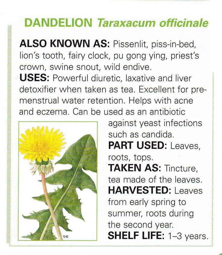 Dandelion root health benefits