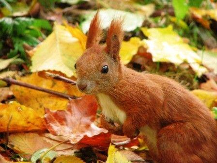 przyroda, natura, jesień