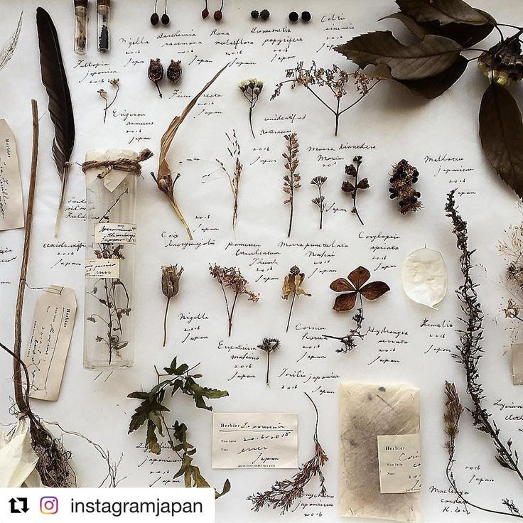 NATURE STUDY - @errer_ on Instagram