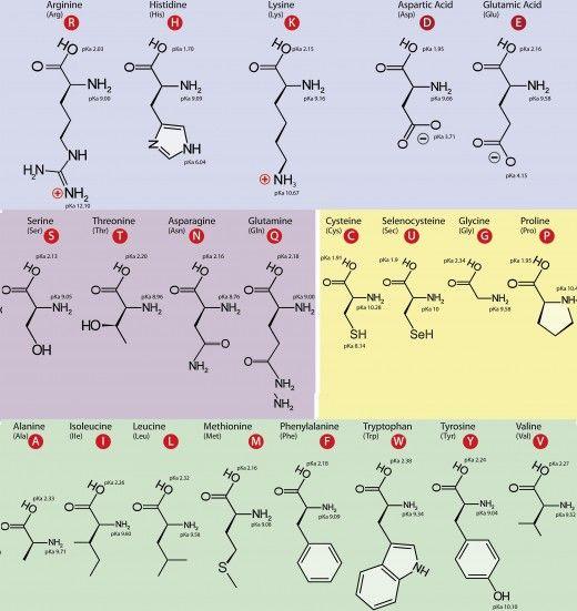 88 best Amino acids ♡ images on Pinterest Food, Healthy foods - amino acid chart