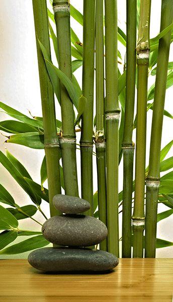 Fotomurales: Bambú y piedras