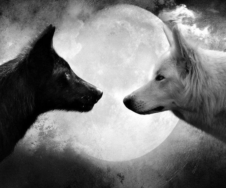 """""""Come il lupo l'intuito delle donne ha artigli che aprono ogni corazza, occhi capaci di vedere oltre ogni maschera e orecchie per udire oltre le chiacchiere: e' con questi strumenti che la donna assume una consapevolezza animale acuta e persino precognitiva, che approfondisce la sua femminilita' e la sua capacita' di muoversi con fiducia nel mondo. """""""