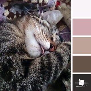 Ma chatte Minna m'a réveillé trois fois cette nuit… comme souvent d'ailleurs… elle se met sur mon ventre et elle touche mon visage avec ses pattes tout douces… caresse-moi ! exige-t-elle. Et je le fais, sans hésiter. Ma belle, mon amoureuse, je t'ai mis en palette de couleurs.