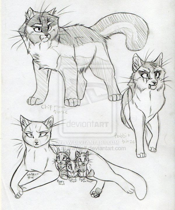 warrior cats!! i want to draw like that...
