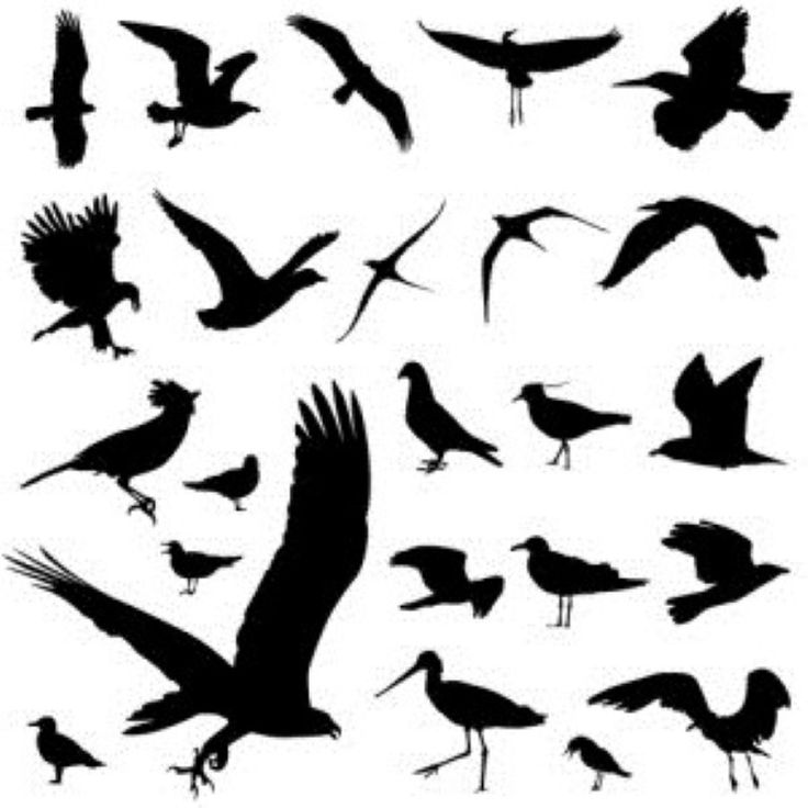 Bird Tattoo Designs For Men and Women