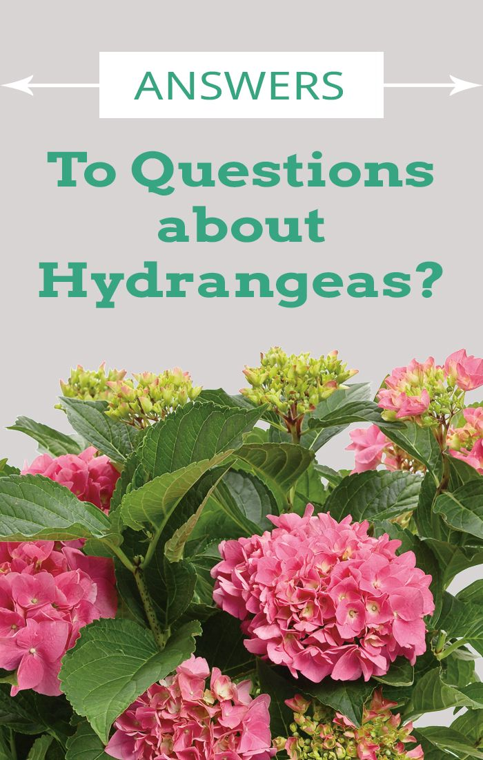 There are many types of hydrangeas, here is a how-to guide to help you understand what these beautiful plants are all about. http://emfl.us/qULd