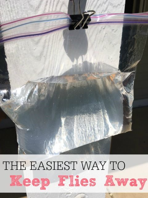 Tired of flies bugging you all day long? Try this simple and inexpensive tip to keep the flies away. It costs less than $.10 and is so easy to make. It really is the easiest way to keep flies away.