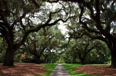 Live Oaks at Brookgreen Gardens, Myrtle Beach SC