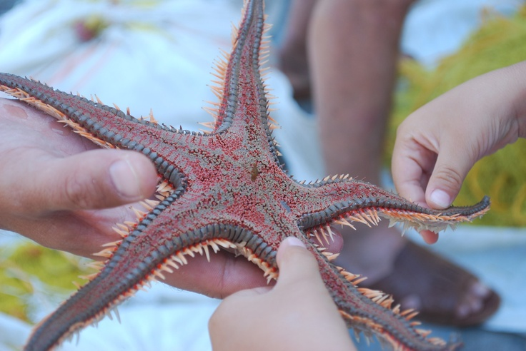 Starfish at Milos