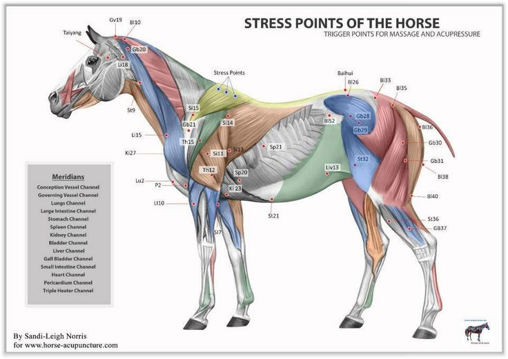 Trigger points for massage and acupressure