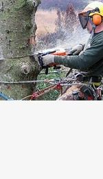 Need best tree lopping Services in Sydney. Call our experts now.