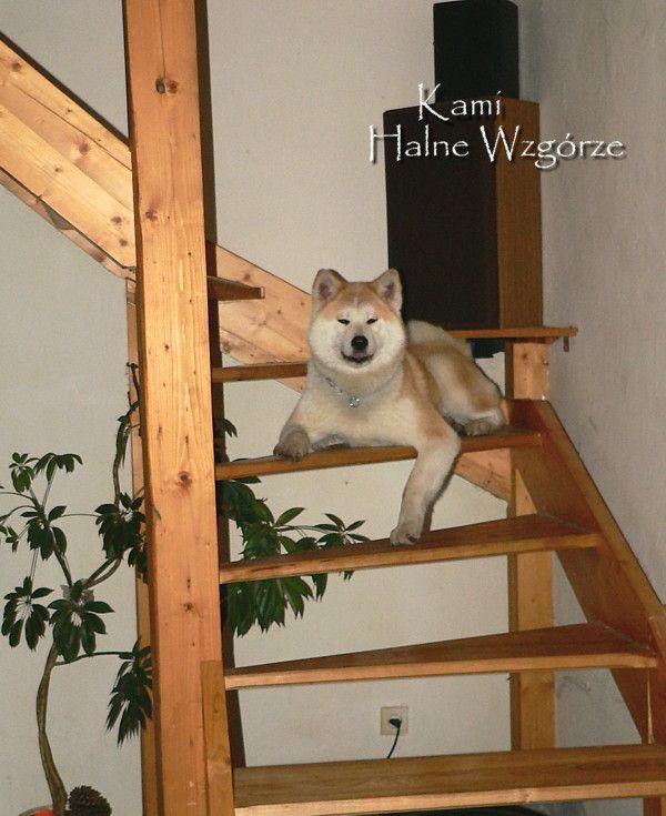 kami-na-schodach2.jpg