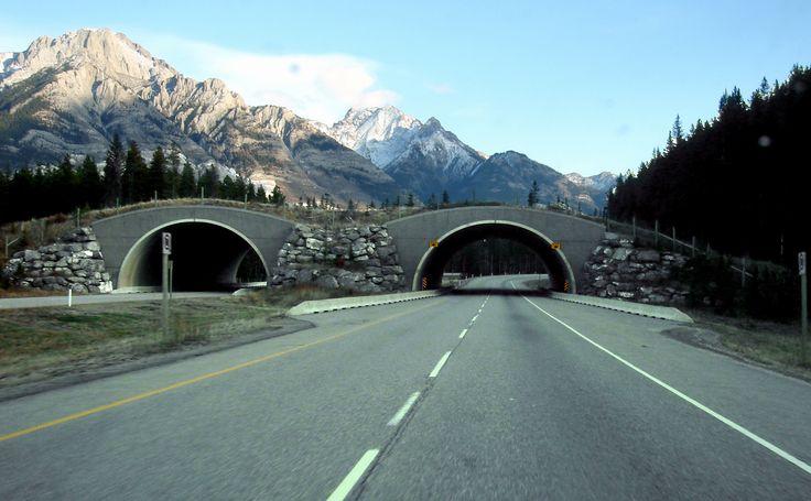 Wildlife bridge, Banff National Park, Alberta, Canada. Clever idea to keep wildlife & people safe... Way to go Canada..
