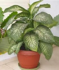 Google Image Result for http://www.hoax-slayer.com/images/killer-house-plant.jpg