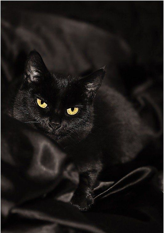Beautiful black cat..... dont you miss the bagels and coffee.....  maybe even the spotlight.    I miss you.