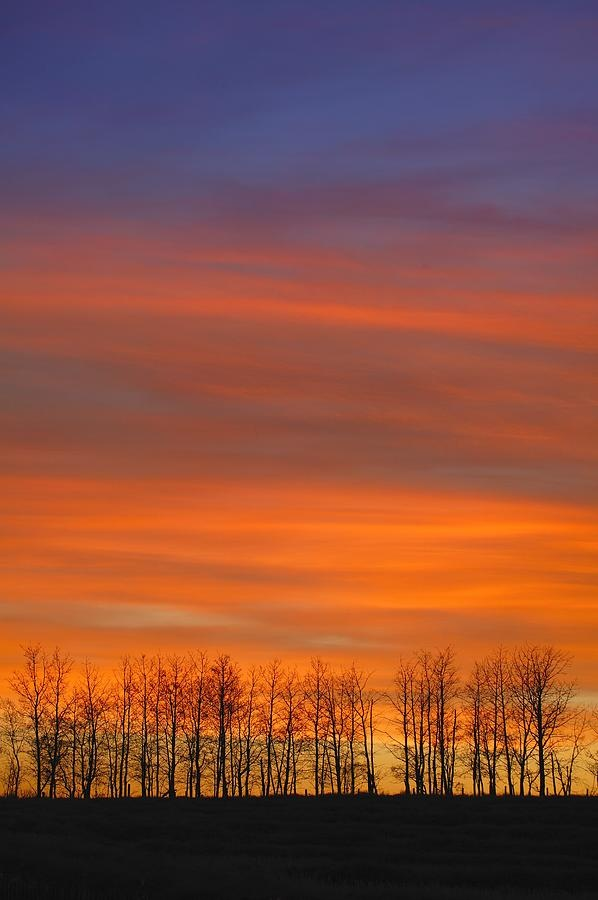 Silhouette Of Trees Against SunsetSilhouettes Of Trees, Graphic Designers, Sunris Sunsets, Graphics Design, Sunrises Graphics, Sunrise Sunsets, Sunsets Time, Trees Silhouet, Sunrises Sunsets