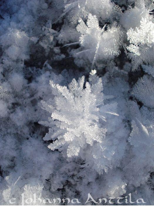 Lumikukkia järven jäällä Snowflowers on the ice.