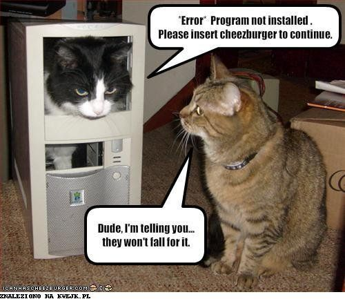 cheezburger: Computer, Animals, Funny Pictures, Funny Cats, Funny Stuff, Funnies, Humor, Funny Animal