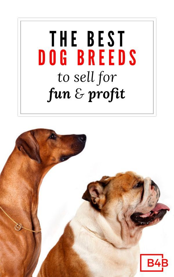 Best Dogs To Breed And Sell Most Profitable Breeding Business