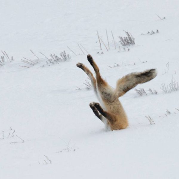 2016 Comedy Wildlife Photography Awards Winners (With