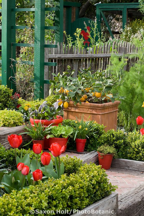 17 best images about how does your garden grow on for Ornamental vegetable garden design