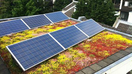 Groen dak met zonnepanelen (SolarSedumdak). Foto: De Dakdokters