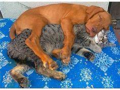 Sleeping buddies!!
