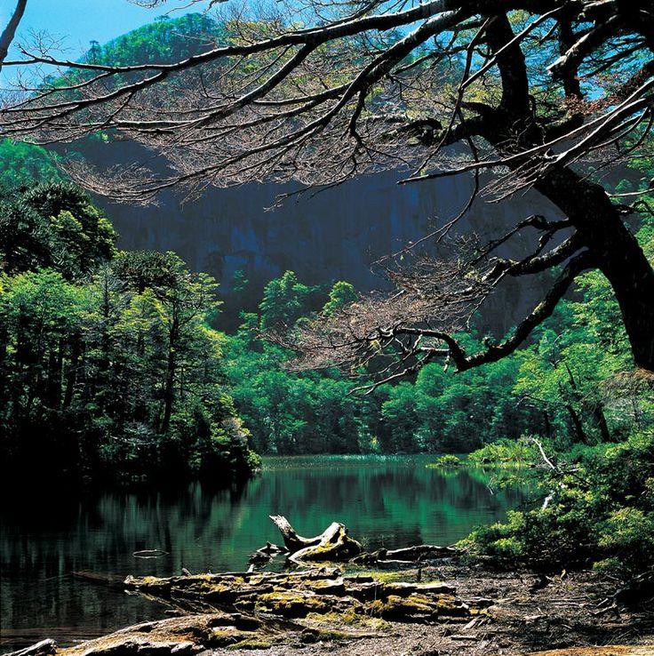 Laguna rodeada de vegetación en el Parque Nacional Huerquehue ubicado en la Novena Región de Chile.