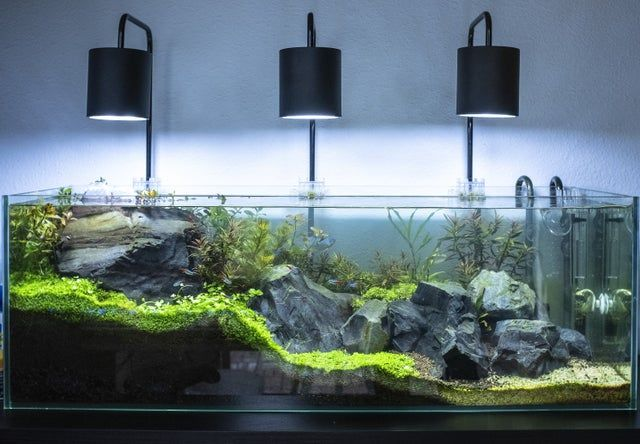 22 Gallon Long Update Plantedtank In 2020 Fresh Water Fish Tank Betta Fish Tank Aquarium Fish Tank
