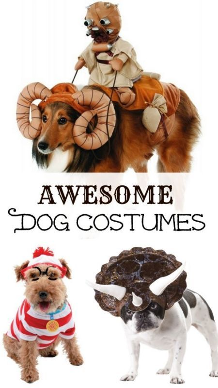 Dogs are such good sports and some (like mine!) love to get dressed up. 14 awesome dog costume ideas for Halloween...or otherwise :)  #dog #ad #halloween