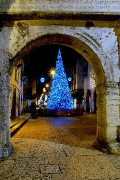 Merry Christmas...Happy Holidays to all who pin & follow....Ciao...all things Italian xx beautiful tree in Verona http://www.homeinitaly.com