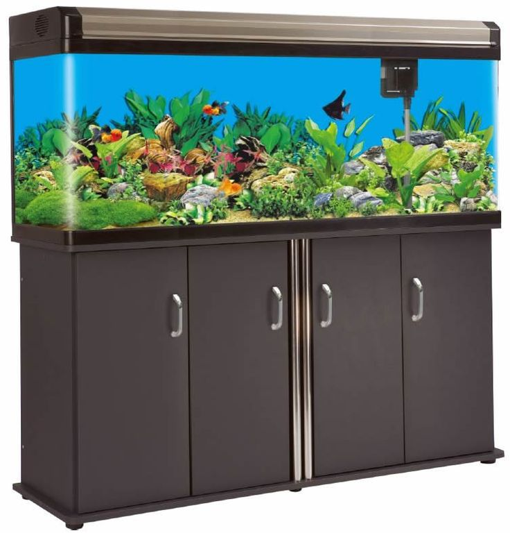 17 Best Images About Project Fish Tank On Pinterest