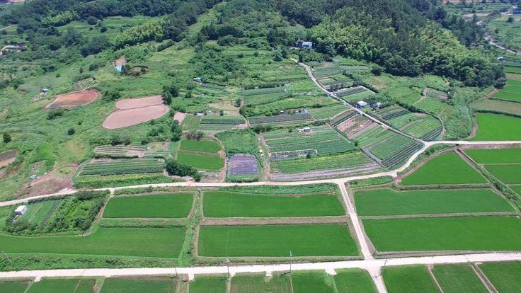 Padi Field Geoje Island
