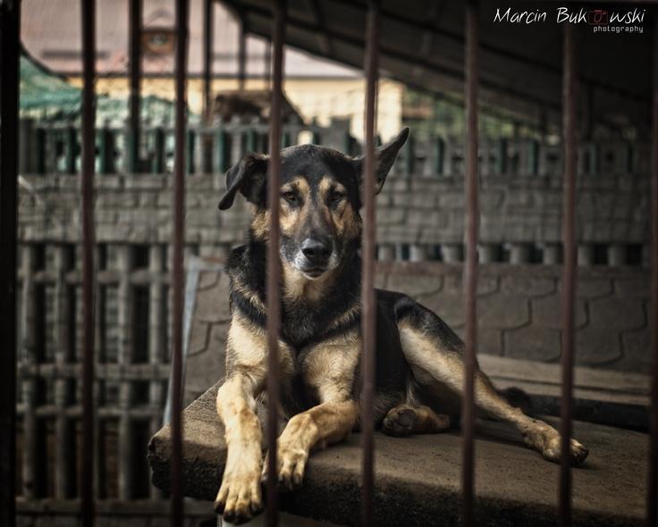 Imię: Ares  Wiek: 2-3 lata  Opis: Ares ma ok 2 lat, jest łagodny, bardzo spragniony kontaktu z człowiekiem. Kontakt w sprawie adopcji Sylwia Olechniewicz, sila82@op.pl, 516 091 867
