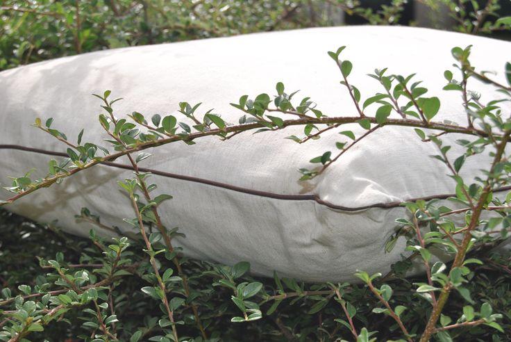 Atención ecologistas!!! Empezamos Septiembre con ofertas en almohadas , cojines y cervicales con relleno natural de algodón cardado y.funda de algodón orgánico!!! Naturales y ecológicas .  Entra y busca la tuya en:  www.lecamaleon.com